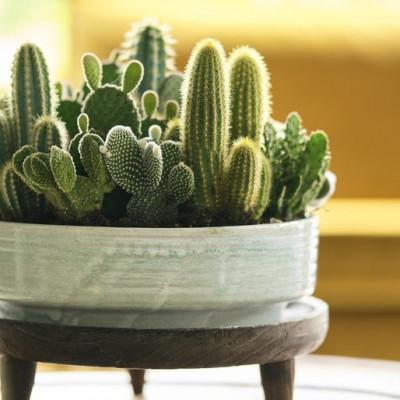 Kaktus i feng shui: Dobra ili loša energija u vašem domu?