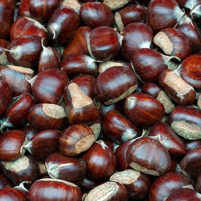 Omiljeni plod jeseni: Kesten čuva vaše zdravlje