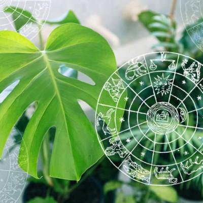 Koja biljka odgovara vašem horoskopskom znaku?